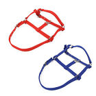 Horse Riding Belts Bridle Halter Headstall Horsing Accessories Red/Blue Collar