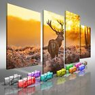 Red Deer In Morning Sun Offset Canvas Print Large Picture Wall Print