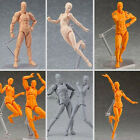 Male/Female PVC Action Figma Archetype Figure Body Toy Arts Anime Model Drawing