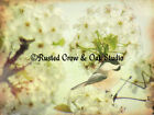 Chickadee Bird White Flower Farmhouse Art Country Home Decor Matted Picture A160