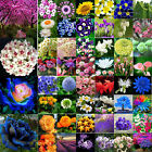 Variety Mixed Rare Colorful Flower Fruit Seeds Home Garden Bonsai Plants Lot New