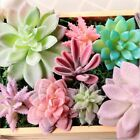 Us Plastic Artificial Fake Flower Succulent Plant Grass Desert Home Room Decor