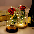 LED Artificial Fake Rose Flower in Glass Dome Lamp Beast Enchanted Wedding Gift