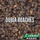 Dubia Roaches - Free Shipping - Jersey Worms