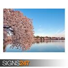 WASHINGTON DC CHERRY BLOSSOM (AD990) NATURE POSTER - Poster Print Art A1 A2 A3