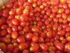 USA HEIRLOOM Organic Sweetie Cherry Tomato 25 200 seeds
