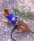 Mynwood Cat Walking Jacket Harness Vest  Holster Superhero - MADE TO MEASURE