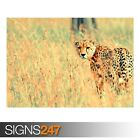 BEAUTIFUL CHEETAH (3398) Animal Poster - Photo Poster Print Art A0 A1 A2 A3 A4