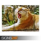 GOLDEN TIGER (3409) Animal Poster - Picture Poster Print Art A0 A1 A2 A3 A4