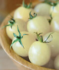 USA HEIRLOOM Italian Ice White Cherry Tomato 25 200 seeds