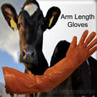 Disposable Insemination Gloves AI Vet Gloves Farm Use or Pond Gloves, Arm Length