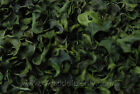 Curly Pods Gold,  Green,  Dark Red,  and Natural - Potpourri Ingredients 4-6-12 oz