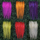 """Wholesale,10-50pcs Staining Peacock Tail Feathers about 10-12 Inches"""" 6 colors"""