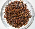 Nagkesar Seeds, Mesua Ferrea Linn Indian Raw & Whole Herbs