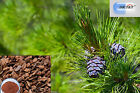 DRT&T 100% pure pine bark pure extract powder with high anthocyanidins 90%