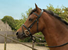 Windsor Equestrian Horses Leather Bridle