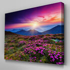 C366 Stunning Flower Meadow Canvas Wall Art Ready to Hang Picture Print