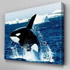 A046 Antarctic Killer Whale Jumping Canvas Art Ready to Hang Picture Print