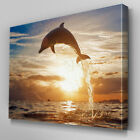 A107 Majestic Dolphin Leap Sunset Canvas Art Ready to Hang Picture Print