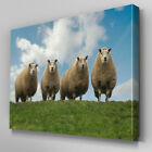 A117 Sheep Herd Hillside Canvas Art Ready to Hang Picture Print