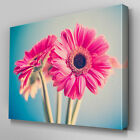 FL537 Pink Gerbera Floral Canvas Wall Art Ready to Hang Picture Print