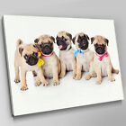 A331 Litter Of Pug Puppies Ribbons Canvas Wall Art Animal Picture Large Print