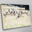 A560 Herd Of Deer Relax In Savanna Canvas Wall Art Animal Picture Large Print