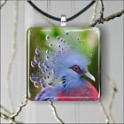Bird Pigeon Victoria crowned  breed SQUARE PENDANTS NECKLACE MEDIUM OR LARGE -z4