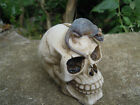 Skull with rat mouse resin Money Bank Coin Saving -