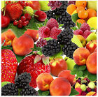 FRUITS - NOVELTY SOUVENIR COASTERS - EASY CLEAN - GIFT IDEAS / XMAS - BRAND NEW