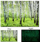 Birch Tree Forest Spring Nature Green Tree - Glow in the Dark Canvas Art Print