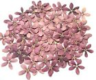 Внешний вид - Pressed Flowers Beautiful Purple 5 Petals Organic DIY Hand Floral Crafts HomeDec