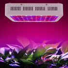 300W 6W LED Red Blue Grow Light Panel Indoor Medical Plant Veg Growth Blooming