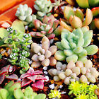 Wholesale Various Flower Seeds Potted Seed Bonsai Plant Home Garden Yard Decor