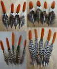 Wholesale 10-100pcs natural pheasants tail feathers 5-30cm / 2-12inch