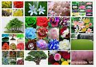 17 Types Of Rare Tree Seeds Flower seeds Planting of Greenery And Flowers