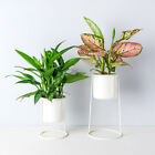 Set of 2 Tabletop Metal Plant Stand Plant Container Air Plant Holders