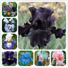 Iris seeds Perennial garden cut flower bonsai plant for outdoor 100 PCS DIY Pot