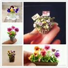 Mixed Color Mini Pansy Seeds Flower Seeds Bonsai Plants Seeds LM