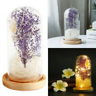 Beauty And The Beast Enchanted Flower Glass Dome LED Lighted Wedding Party Decor
