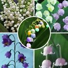40 Pcs Lily of the Valley flower bell orchid seeds rich aroma bonsai flower seed