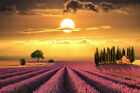 169559 Sunset over Lavender fields Tuscany Nature Art Decor Wall Poster Print