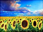 Sunflower Field Landscape Limited Edition Print Of Original Oil Painting Sky