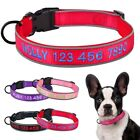 Embroidered Reflective Dog Collar Personalized Custom Name Soft Padded Nylon S-L