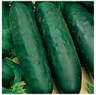 Marketmore 76 Cucumber Seeds | NON-GMO | Fresh Garden Seeds