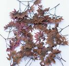 Pressed Bunch of Brown Flowers Organic Floral Crafts Home Arts DIY Decors