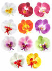 "10X Silk Phalaenopsis Phal Flower head Artificial Orchid 3.75"" lot Wedding Home"