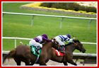 Even Finish Method System for Handicapping Horse Racing - Action!! NEW Tom Worth
