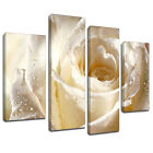 MAB075 Wet White Rose Sparkle Canvas Wall Art Multi Panel Split Picture Print