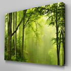 C202 Green Forest Canvas Wall Art Ready to Hang Picture Print